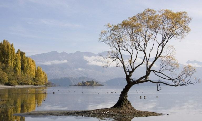 a solitary tree
