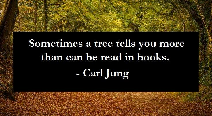 jung quote