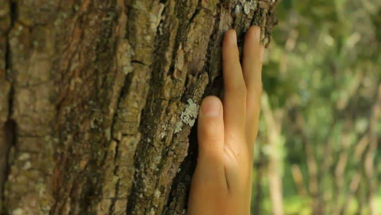 touching the tree