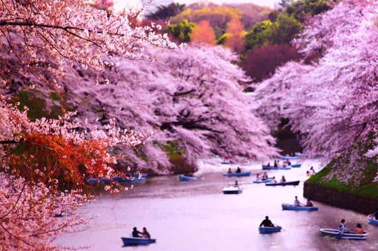 cherry-blossom-japan-bucket-list-idea