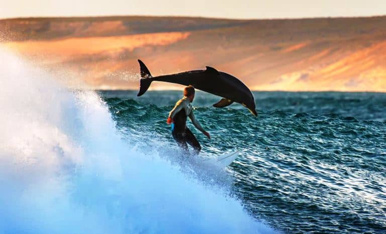 surfing-in-australia-bucket-list-idea