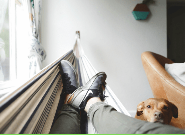 Person chilling in a hummock at home with a dog